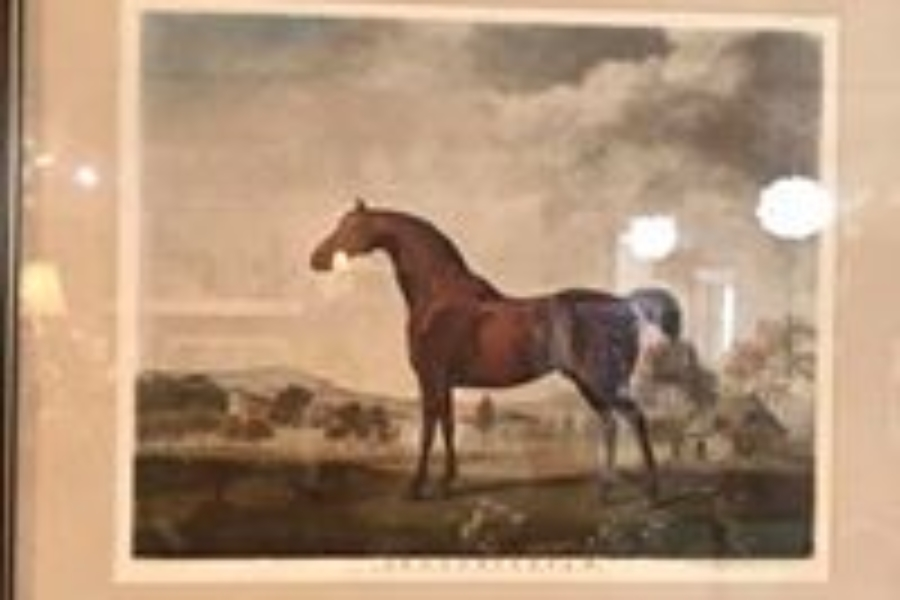 Sweet William Engraving Print • This is a print of an engraving by George Stubbs, entitled 'Sweetwilliam', a Bay Racehorse, in a Paddock, 1779′. Perfect for horse lovers and Anglophiles.